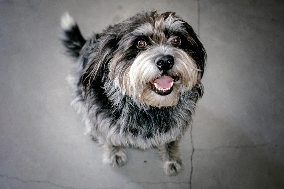 Louie The Dog